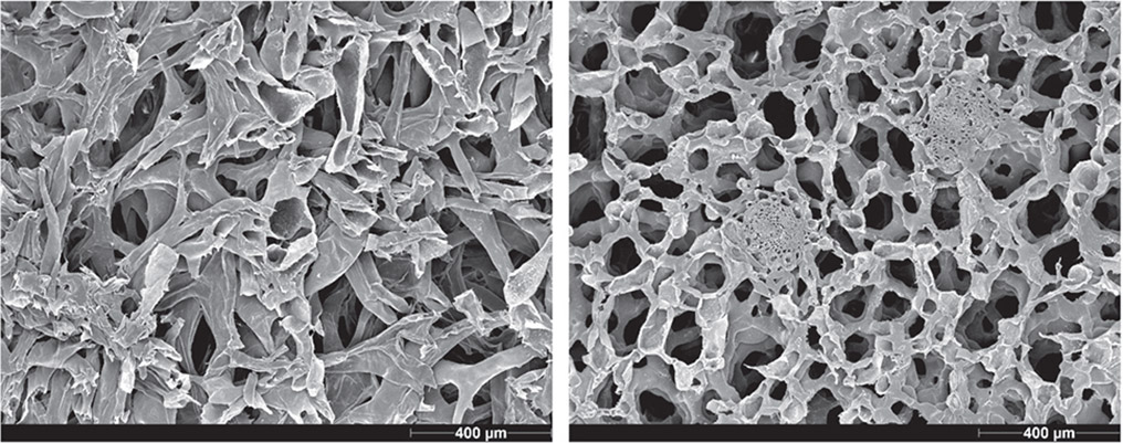 Pomelo peel, SEM images of peel samples cut parallel to the epidermis. Left: dense part of the peel adjacent to the fruit pulp. Right: less dense outer foamy third of the peel with two vascular bundles.