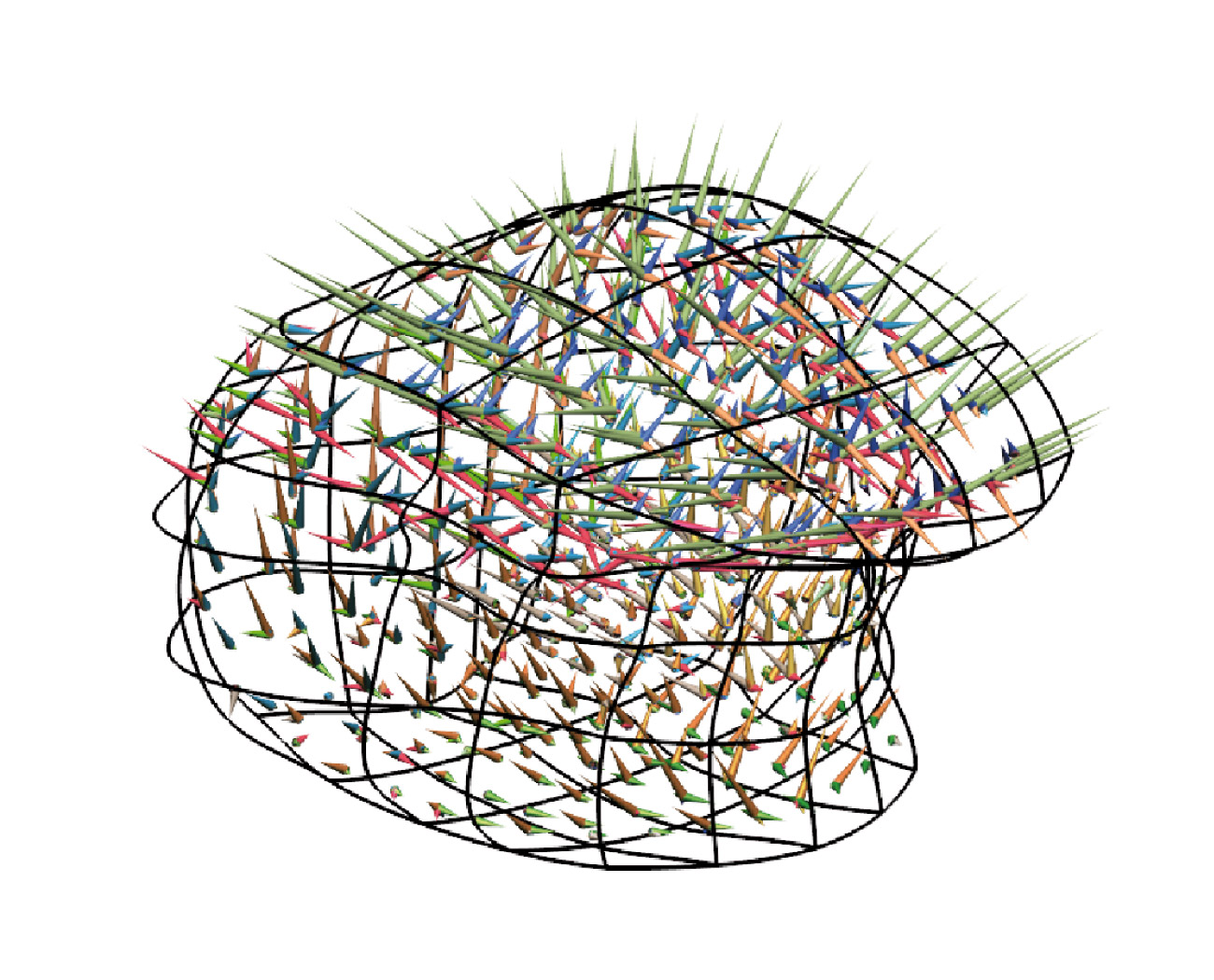 Model of the complex muscle fibre distribution of the tongue in which the cones depict the directions of the different muscle fibre groups and the length of the cones represents the scaled volume fraction taken up by a muscle fibre group within a representative volume.